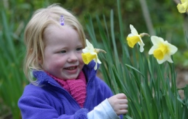 Photo of child picking daffodils